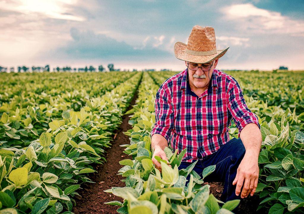 Hombre con sobrero junto a sus cultivos