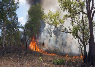 Australien brennt ab: Hitzewelle und Buschbrände nehmen kein Ende!