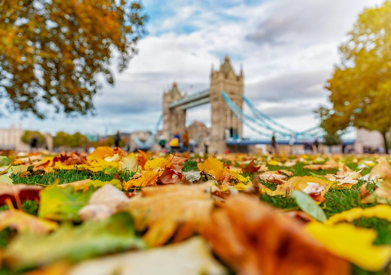 Autumn leaves by park near London Bridge.