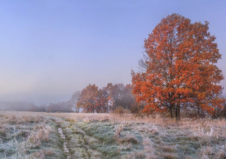 Automne froid