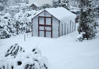 Die Winteprognosen stürzen alle ab! Kältester Winter seit Jahren?