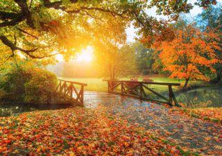 ¡Bienvenido otoño!, te estábamos esperando