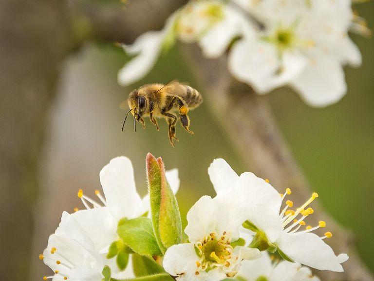 ape-biodiversità