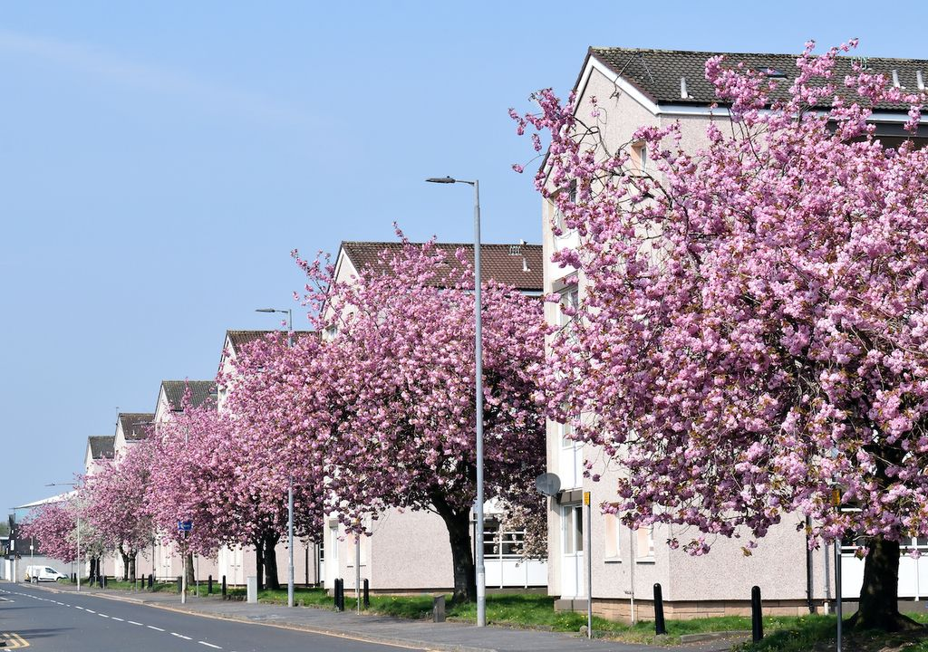 People across the UK have been participating the Blossom Watch day.
