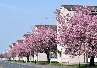 Blossom Watch builds UK map of blooms