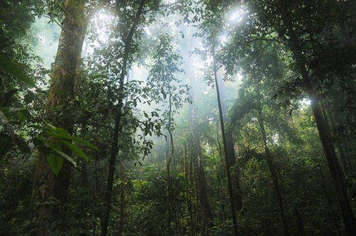 Bosques Tropicales Sumideros De Carbono