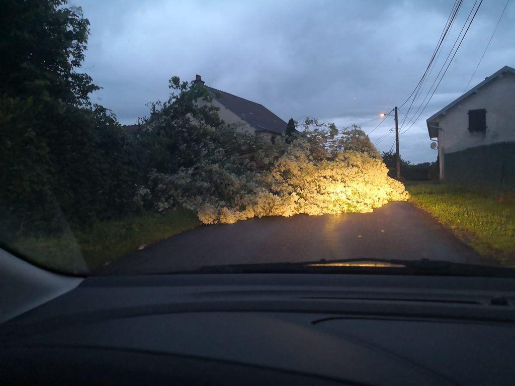 Chutes d'arbres et de fils électriques ont été nombreuses au passage des vents tempétueux sur l'ouest-Bretagne.
