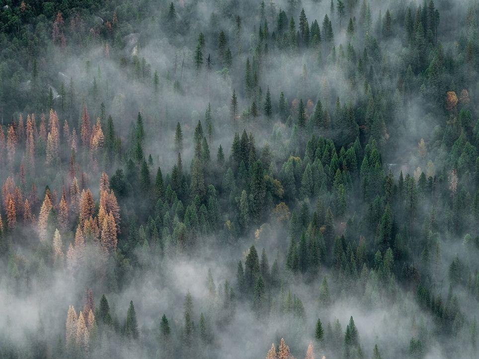Incendios en Sibeia