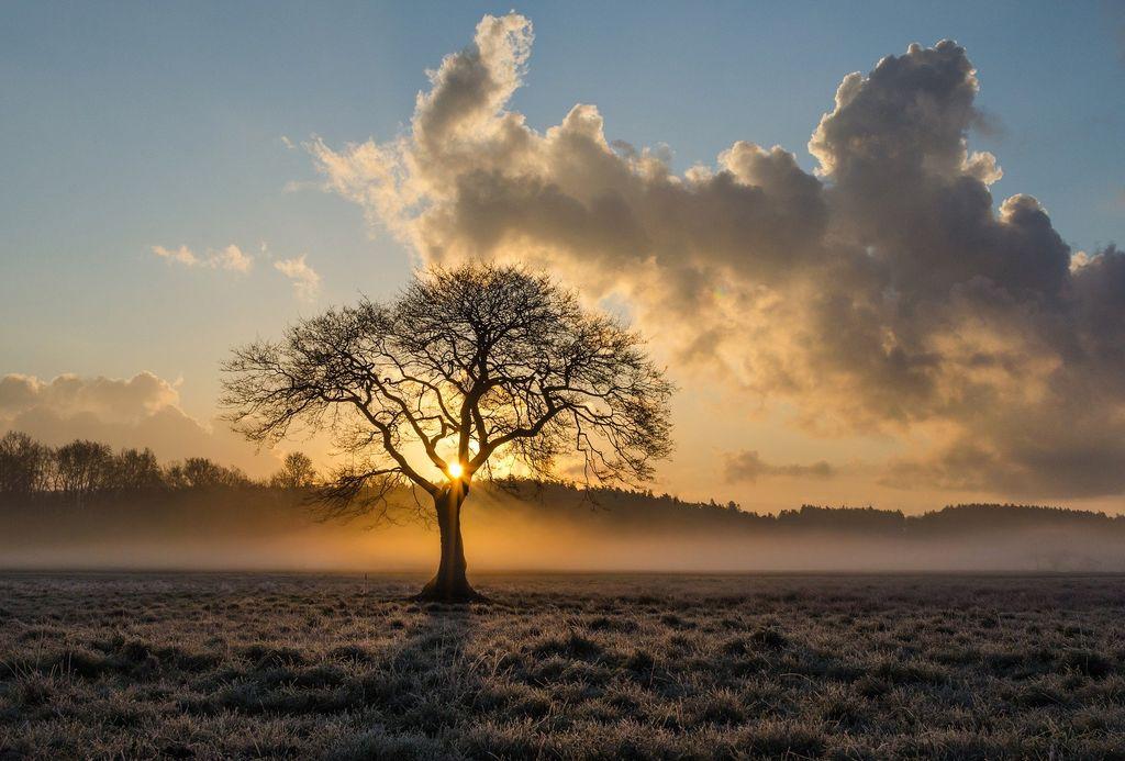 Les brouillards vont faire leur retour dimanche dans de nombreuses régions.
