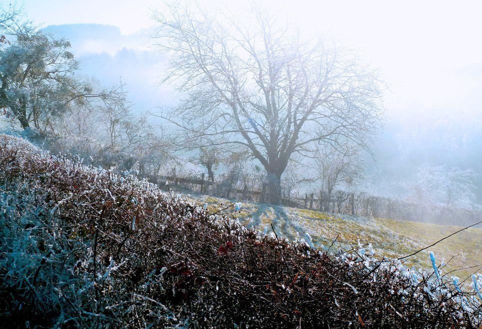 retour des gelées parfois marquées dans les camapagnes