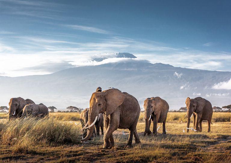 Elefantes com o Kilimanjaro ao fundo.