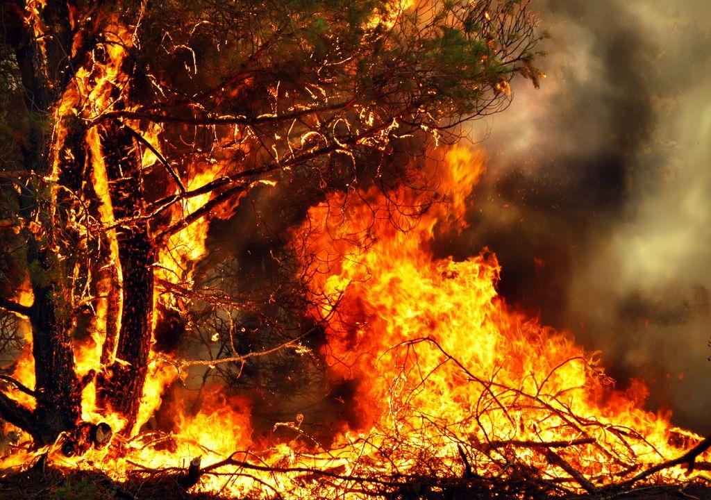incêndio florestal; fogo; chamas; labaredas