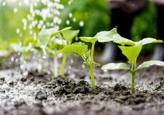 Chuvas em Outubro favorecem o início da safra de grãos no Brasil