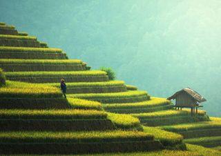 Ci saranno alimenti per tutti nell'anno 2050?