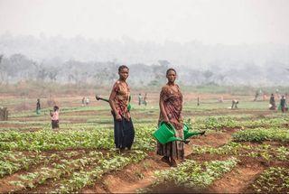Cinco acciones por el clima para un mundo sin hambre