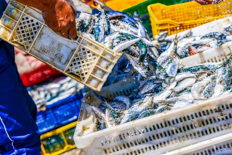 El consumo de pescado casi se ha duplicado desde la década de 1960. Nuestra demanda de alimentos del mar aumenta, a pesar de que estos recursos están cada vez más amenazados. ©Pixinoo/shutterstock.com