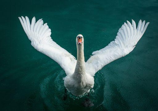 Cisne verde: crisis financiera por el cambio climático