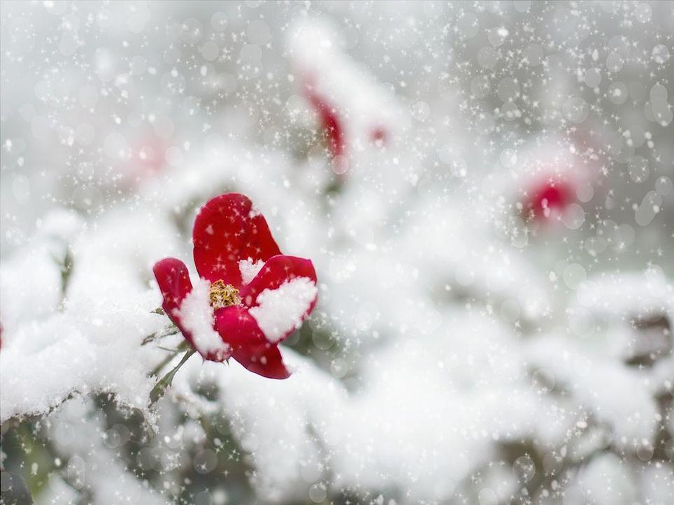 maggio-neve