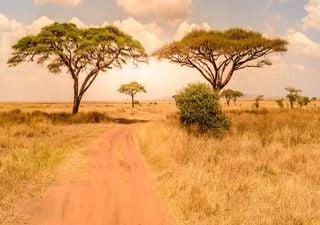 Clima e seus impactos em África: presente e futuro