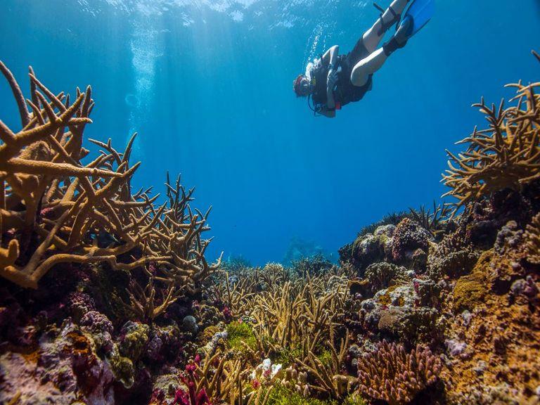 Coral reef.