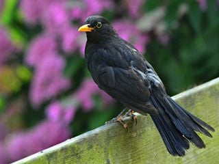 Climate change found to benefit some English birds