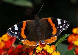 Climate change impact on butterflies depends on species