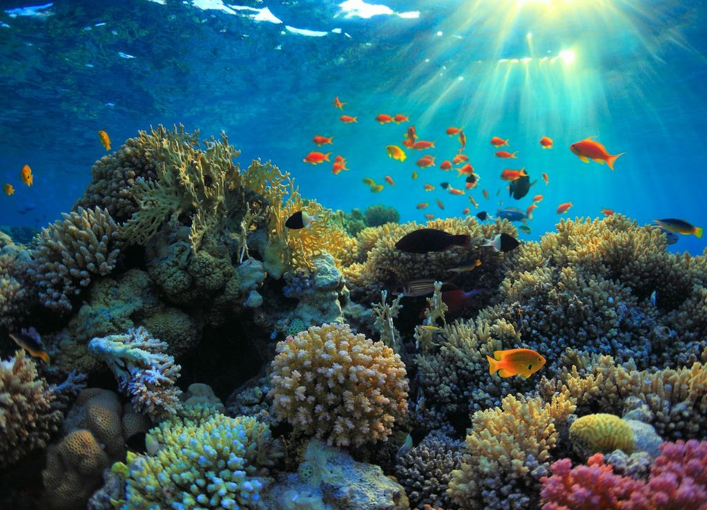 An Indian Ocean coral reef, known for harbouring very high levels of biodiversity.
