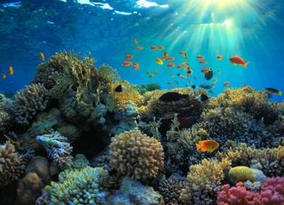 Climate projections outline the stark future for coral reefs