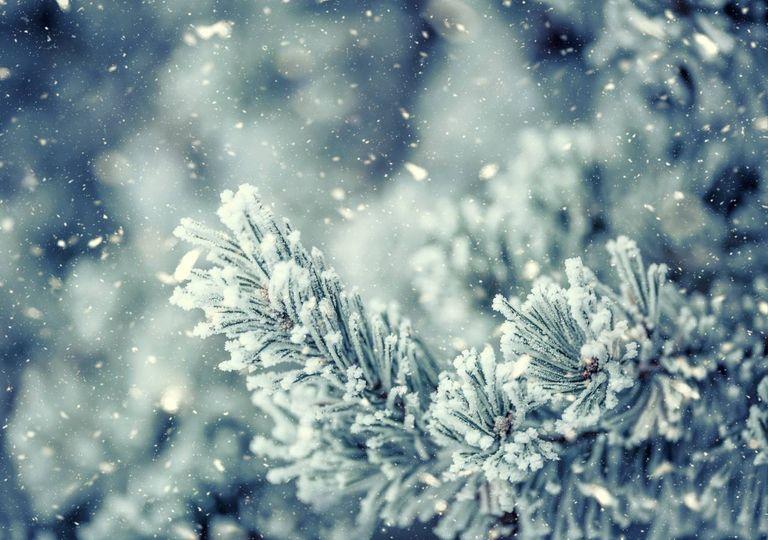 Neve nas árvores