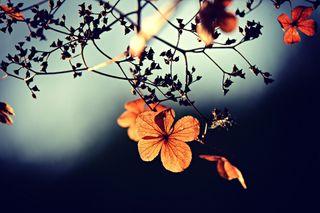 Rentrée, automne : comment se préparer face à ces changements ?