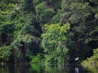 Como a poluição afeta a Floresta Amazônica?