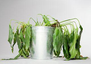 Comment ressusciter vos plantes au retour de vacances ?