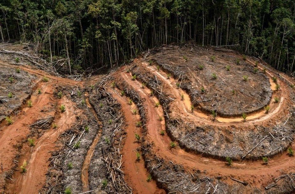 """Como ha afirmado la secretaria ejecutiva de la Convención de las Naciones Unidas sobre la Diversidad Biológica, """"la pérdida de biodiversidad es un asesinato silencioso y una amenaza tan grave como el cambio climático"""". Fuente: Greenpeace."""