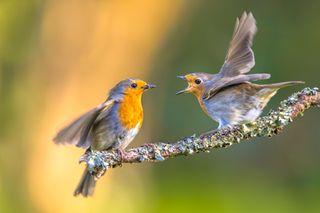 Confinement : une accalmie pour la biodiversité