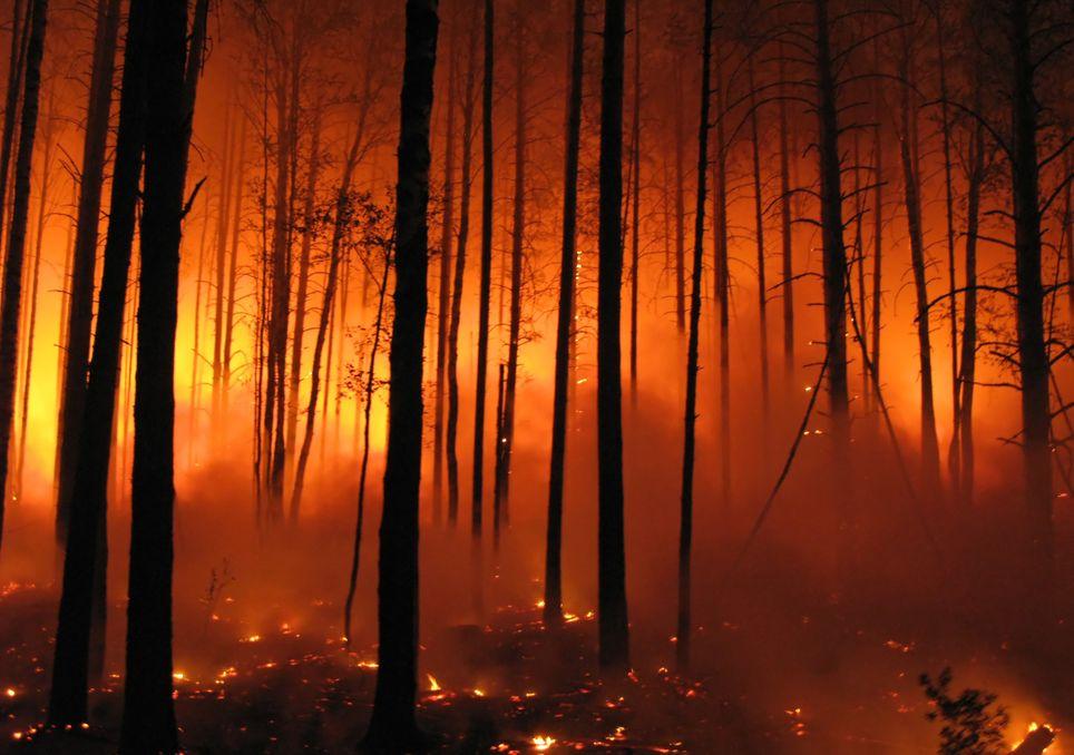 incendios, clima, cambio climatico, bosques, cultivos, argentina, ola de calor