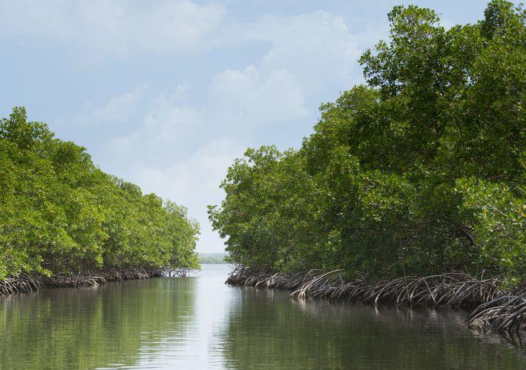 Ecossistema manguezal
