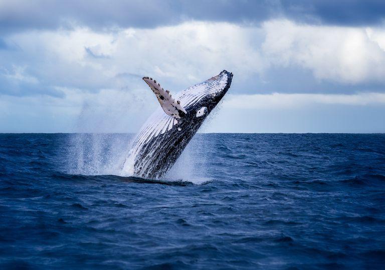 Whale in ocean.