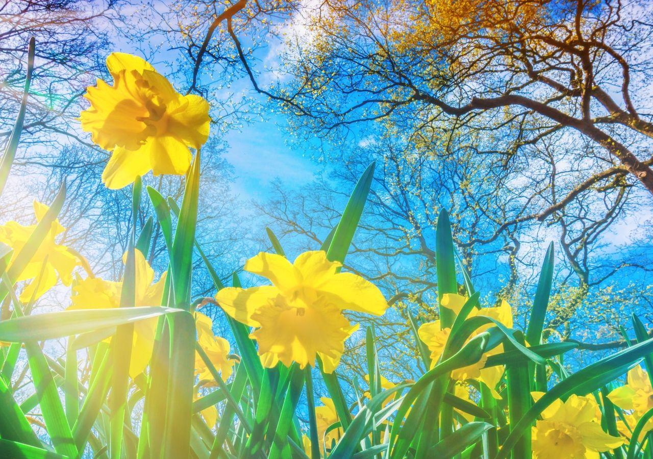 Bildergebnis für der Frühling kommt