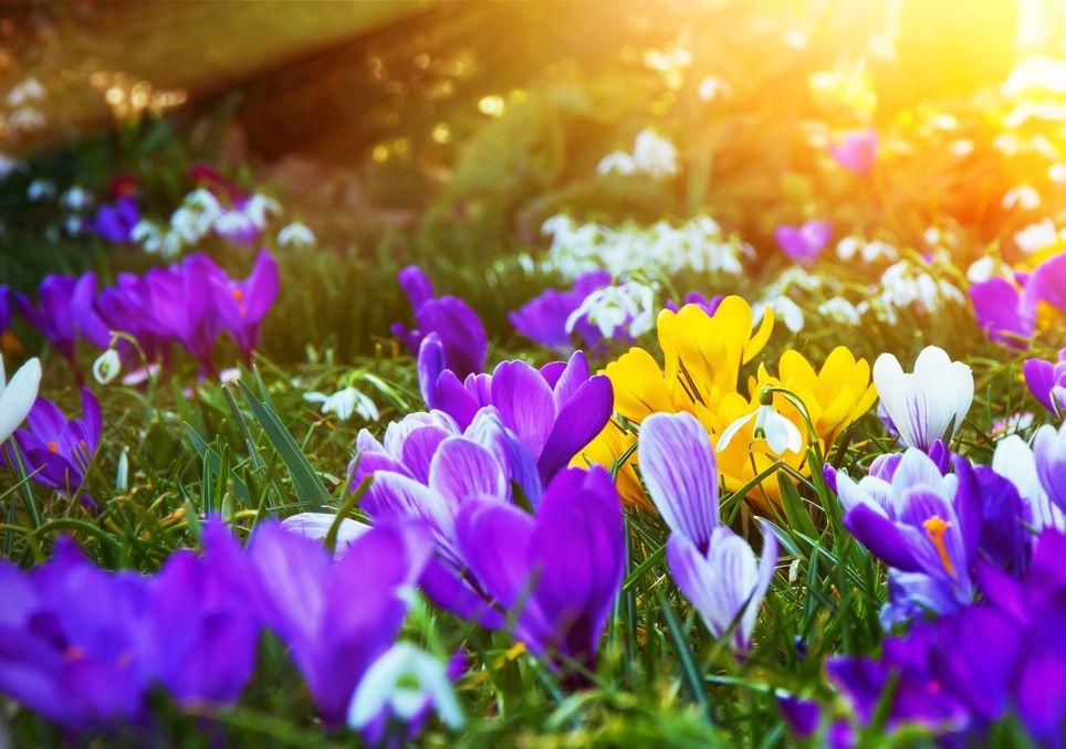 Frühling statt Winter