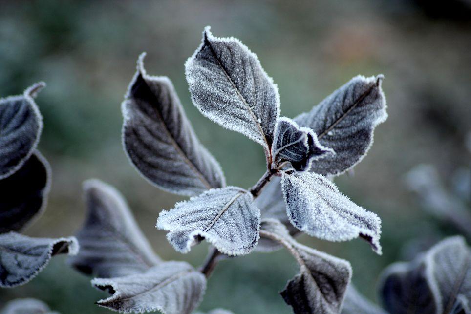 Des gelées sont-elles à redouter pour la période des Saints de Glace ?