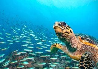 Des océans en bonne santé d'ici 2030 ? Le pari fou des Nations Unies