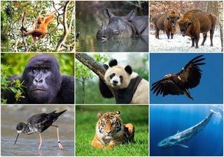 Desde 1993 se evitó la extinción de 48 especies