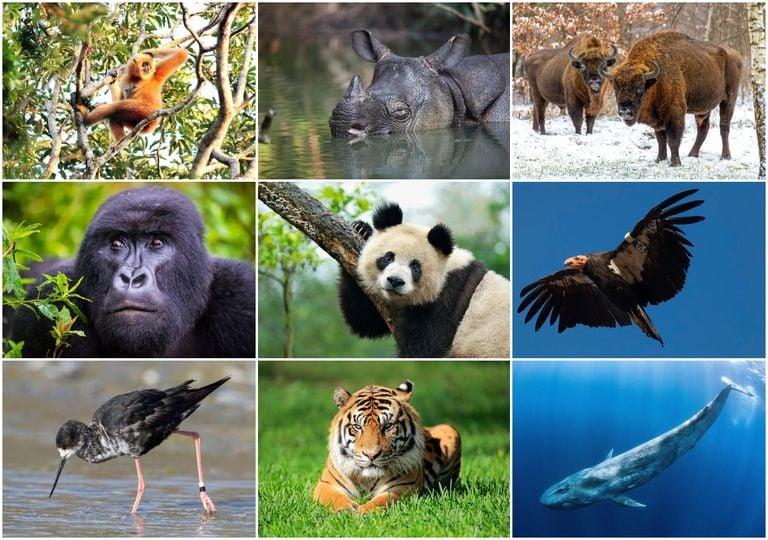 extincion, animales, conservacion, fauna