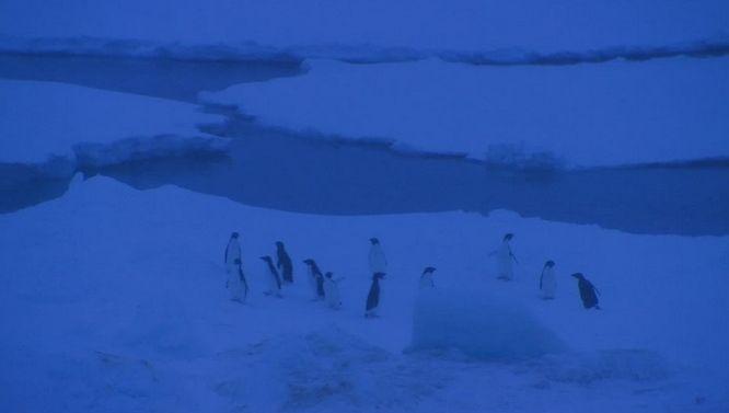 Deshielo En El Invierno Helador Antártico: Descubrimiento Sorprendente