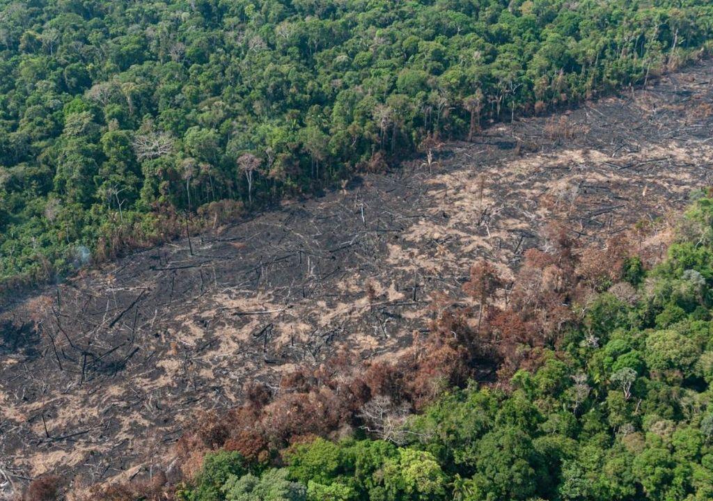 Desmatamento em alta na Amazônia