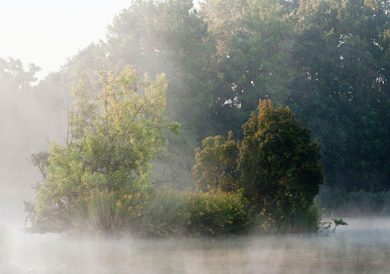 Neblina, Niebla, Temperatura, Otoño, Frio, Lluvia