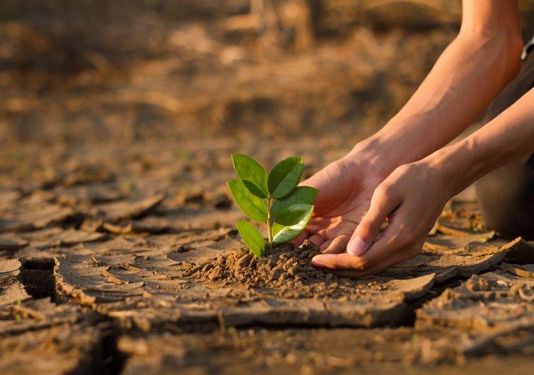 clima; solo; planta;