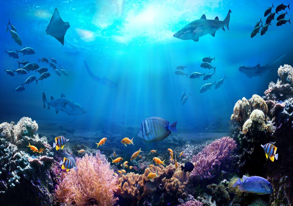 Oceanos; Peixe; Vida marinha; recifes de coral