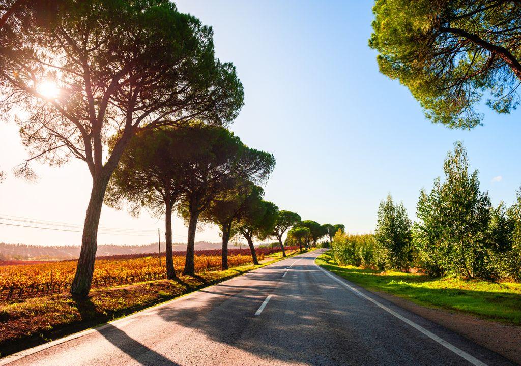 calor; outubro; portugal; outono; estrada; árvores