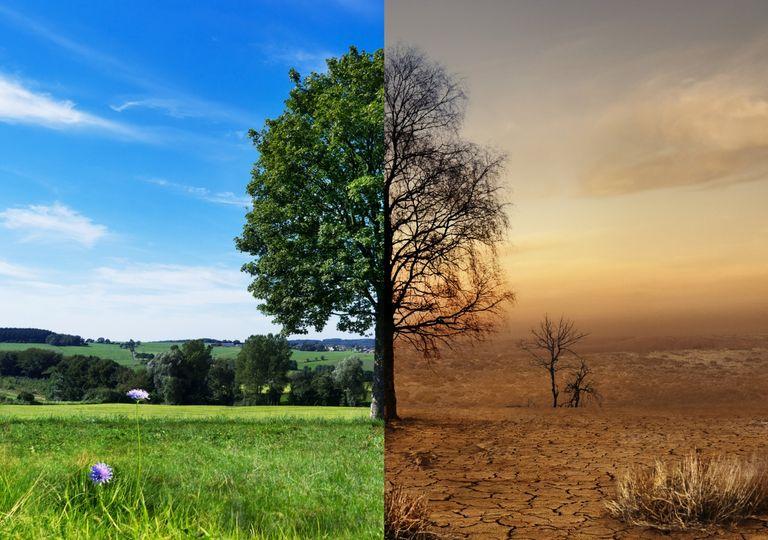 Dürre oder feuchte Wiesen